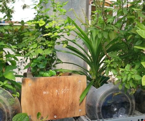 Lạ mắt vườn cây từ vật dụng tái chế của học sinh lớp 8 - 13