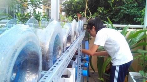 Lạ mắt vườn cây từ vật dụng tái chế của học sinh lớp 8 - 3