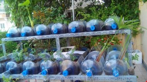 Lạ mắt vườn cây từ vật dụng tái chế của học sinh lớp 8 - 4