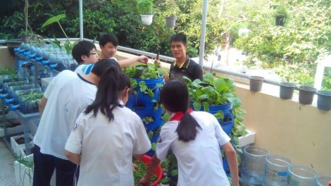 Lạ mắt vườn cây từ vật dụng tái chế của học sinh lớp 8 - 6