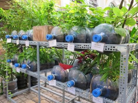 Lạ mắt vườn cây từ vật dụng tái chế của học sinh lớp 8 - 8