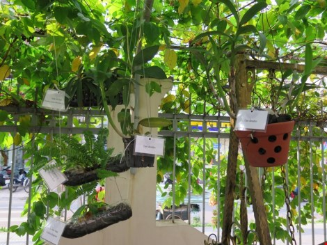 Lạ mắt vườn cây từ vật dụng tái chế của học sinh lớp 8 - 9