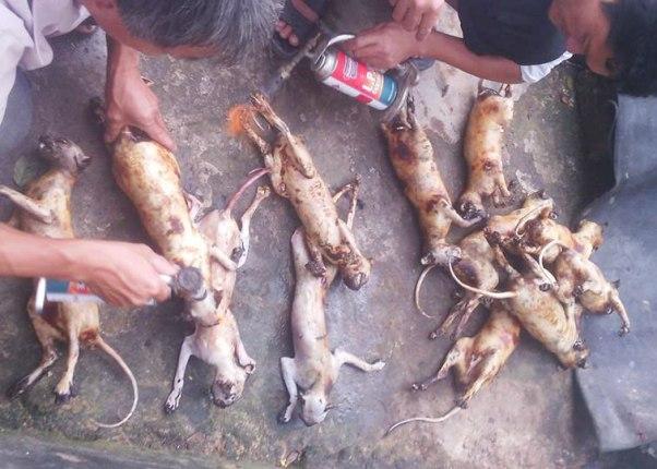 Giết khỉ, khoe trên Facebook: Lộ đường dây mua bán động vật quý hiếm - 3