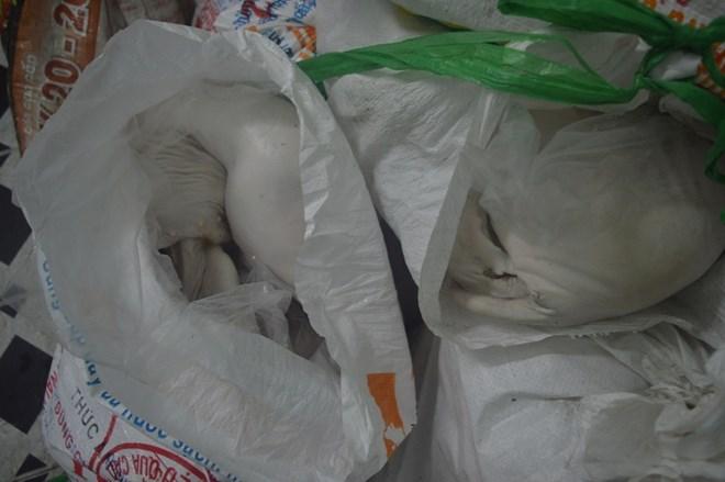 """TP.HCM: Bắt hơn 300kg heo sữa """"bẩn"""" trên xe giường nằm - 2"""