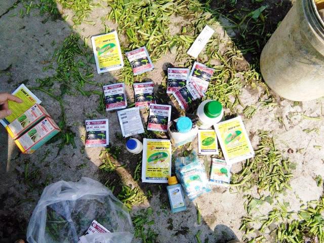 Bắt quả tang nông dân dùng dầu nhớt thải... tưới rau - 2