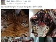 Tin tức trong ngày - Rao bán hổ, gấu, đại bàng công khai trên facebook