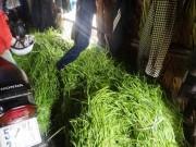 Tin tức trong ngày - TP HCM: Bắt quả tang đầu mối thu mua rau muống ngâm hóa chất