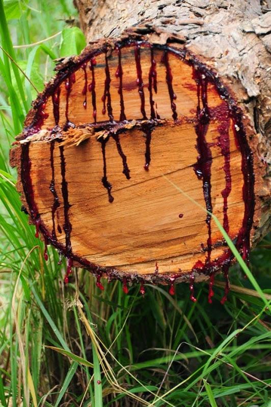 Kinh hãi: Loài cây chảy nhựa như máu ở châu Phi - 2