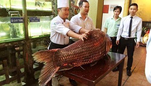 """TP.HCM: Chi gần nửa tỷ mua cá hô """"khủng"""", nặng 130kg - 2"""