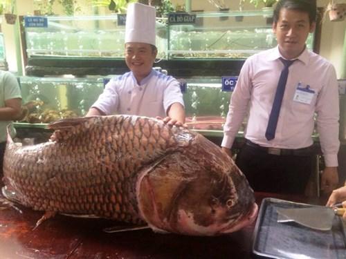 """TP.HCM: Chi gần nửa tỷ mua cá hô """"khủng"""", nặng 130kg - 3"""