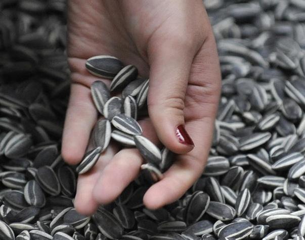 Cách loại bỏ độc tố khi bạn ăn hạt hướng dương dịp Tết - 1