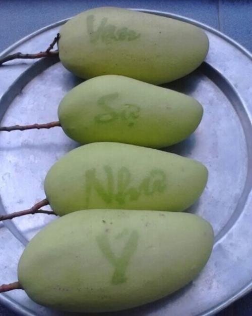"""4 loại trái cây đang """"làm mưa làm gió"""" trên thị trường Tết - 4"""
