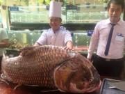 """Tin tức Việt Nam - TP.HCM: Chi gần nửa tỷ mua cá hô """"khủng"""", nặng 130kg"""