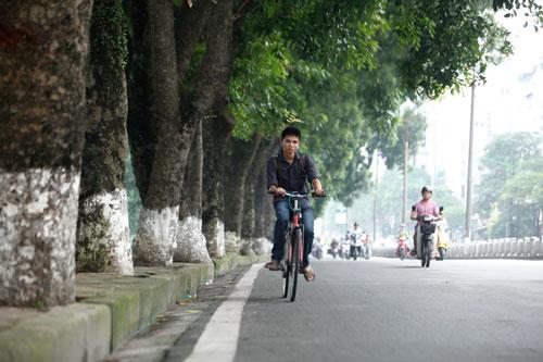 HN sắp chặt hạ, đánh chuyển hàng cây cổ thụ phố Kim Mã - 1