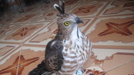 Thanh niên khoe giết khỉ bị điều tra vì nuôi nhốt chim cắt - 2