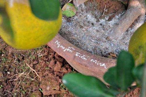 """Vườn cây 10 quả chơi Tết """"siêu lạ"""" của lão nông Hà thành - 13"""