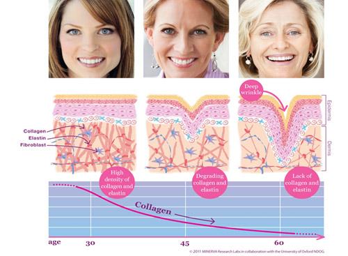 Liệu Collagen có phải là phương thức thần kỳ cho sắc đẹp? - 2