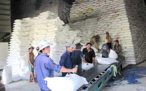 Gạo Việt phải sang Thái kiểm định, tốn 500 USD/mẫu - 1