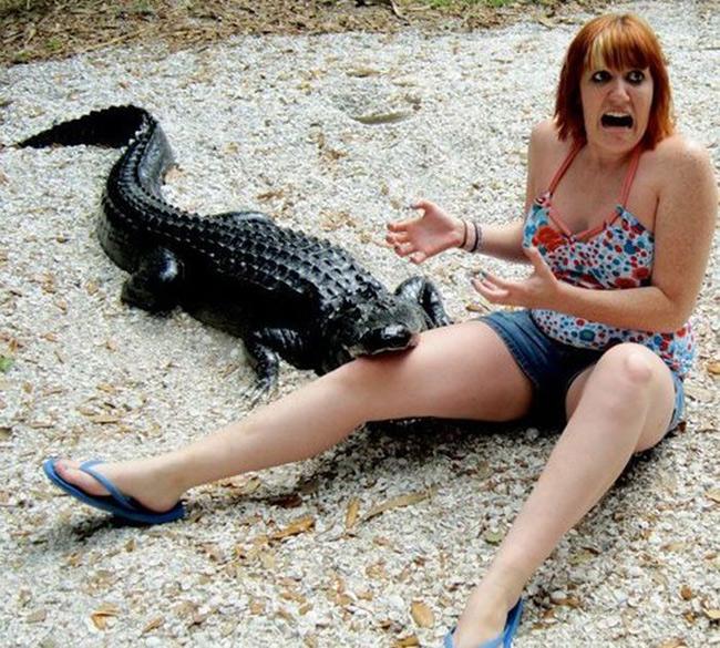 """Giờ em biết sợ  """" cá sấu """"  rồi các bác ạ."""