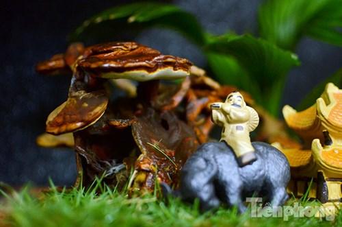 Cận cảnh nấm linh chi bonsai tiền triệu chơi Tết - 4