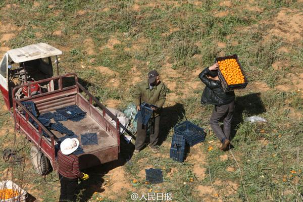 TQ: Dân đánh ô tô đi hôi cam từ xe tải lật - 4