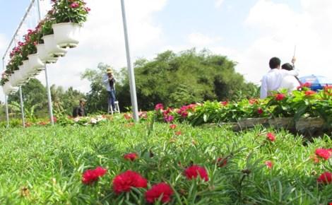 Về làng hoa Sa Đéc chụp ảnh tự sướng - 1