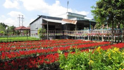 Về làng hoa Sa Đéc chụp ảnh tự sướng - 11