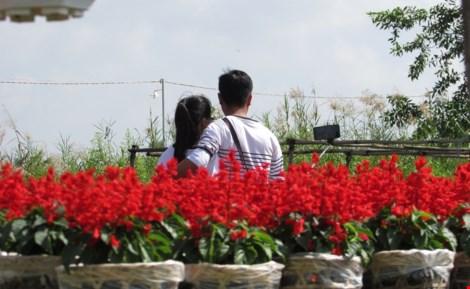 Về làng hoa Sa Đéc chụp ảnh tự sướng - 2