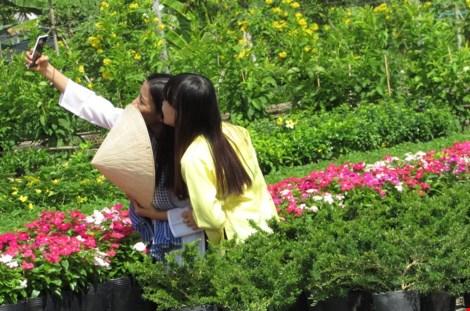 Về làng hoa Sa Đéc chụp ảnh tự sướng - 3