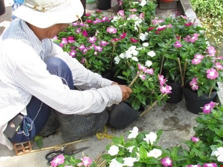 Về làng hoa Sa Đéc chụp ảnh tự sướng - 8