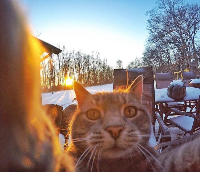 Chú mèo đặc biệt có sở thích chụp ảnh 'tự sướng' - 2