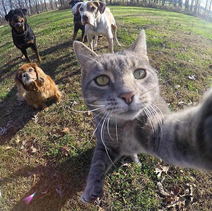 Chú mèo đặc biệt có sở thích chụp ảnh 'tự sướng' - 1