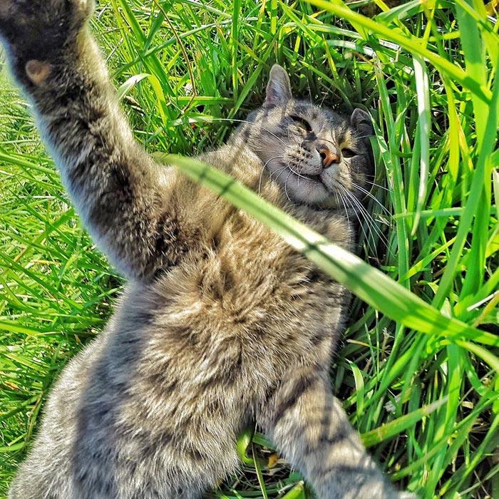 Chú mèo đặc biệt có sở thích chụp ảnh 'tự sướng' - 4