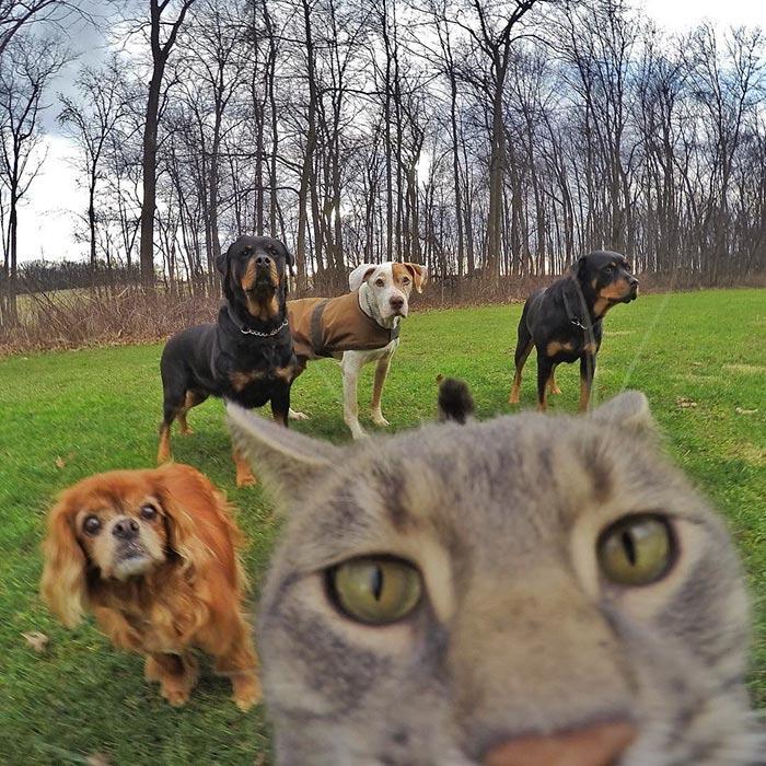 Chú mèo đặc biệt có sở thích chụp ảnh 'tự sướng' - 6