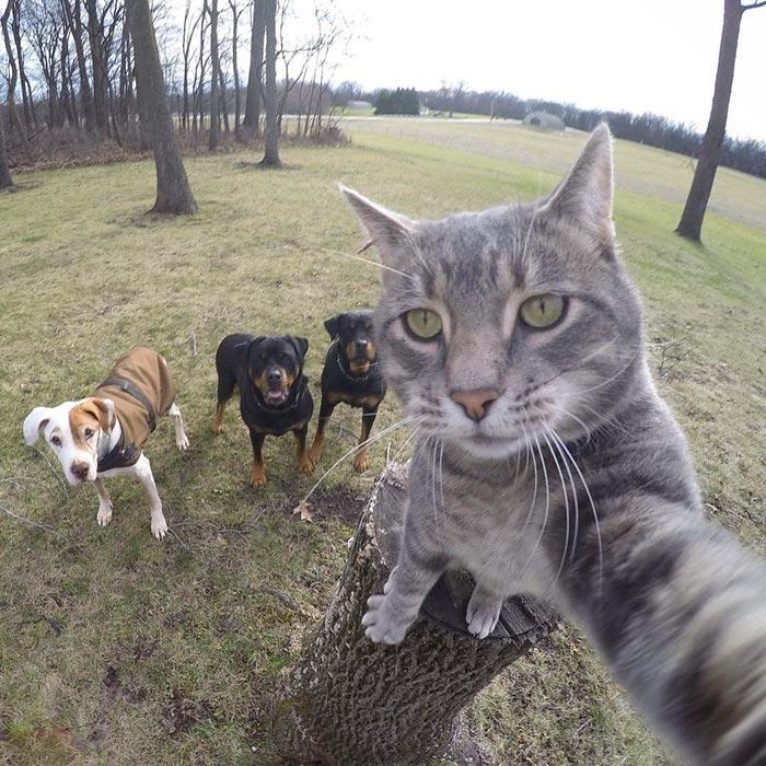 Chú mèo đặc biệt có sở thích chụp ảnh 'tự sướng' - 5