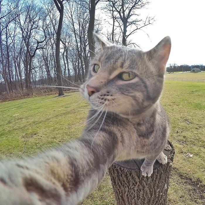 Chú mèo đặc biệt có sở thích chụp ảnh 'tự sướng' - 8