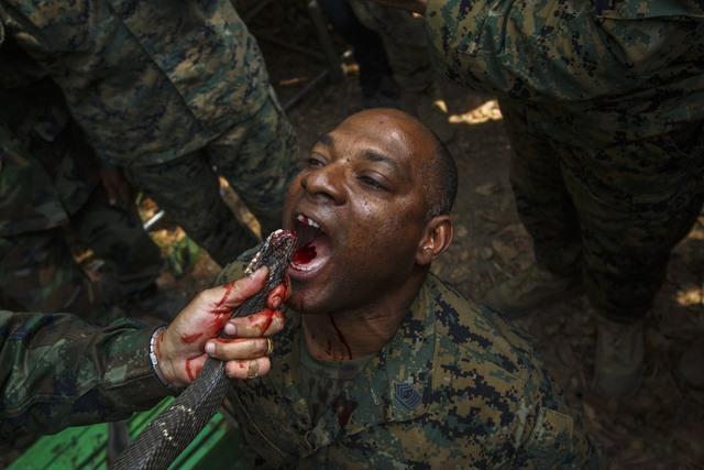14 hình ảnh huấn luyện quân sự khắc nghiệt nhất thế giới - 5