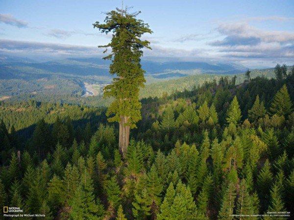 Phát hiện thú vị về cây xanh cao nhất thế giới - 1