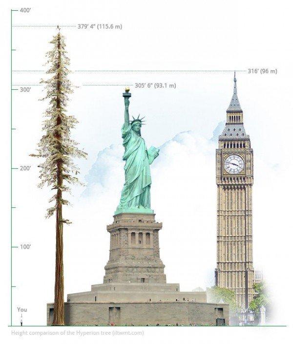 Phát hiện thú vị về cây xanh cao nhất thế giới - 2