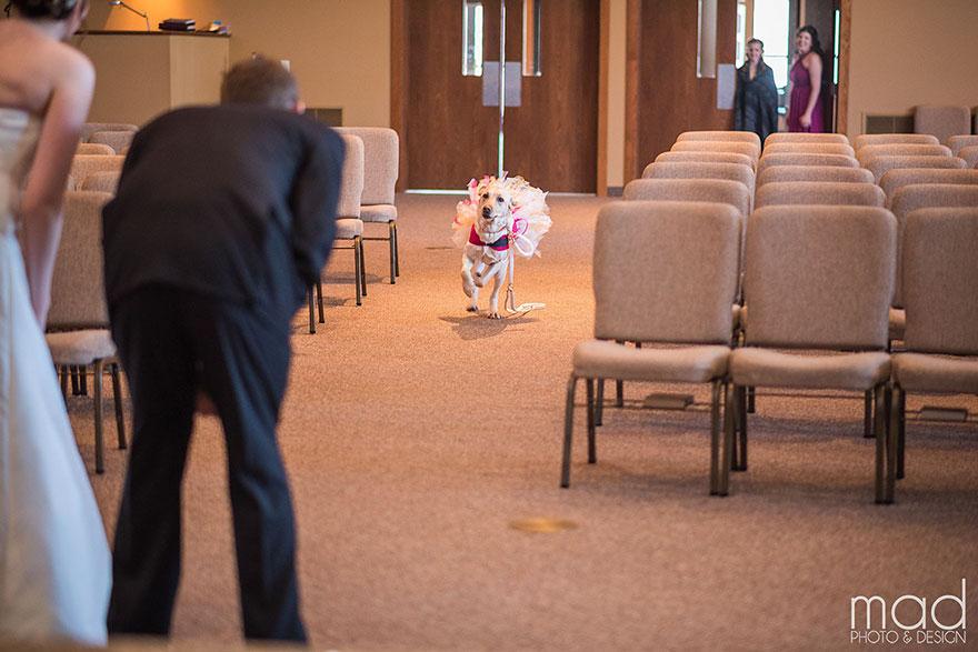Cảm động chú chó an ủi cô dâu trước lễ cưới - 1