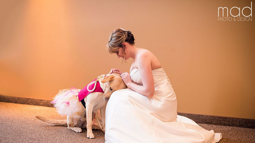Cảm động chú chó an ủi cô dâu trước lễ cưới - 5