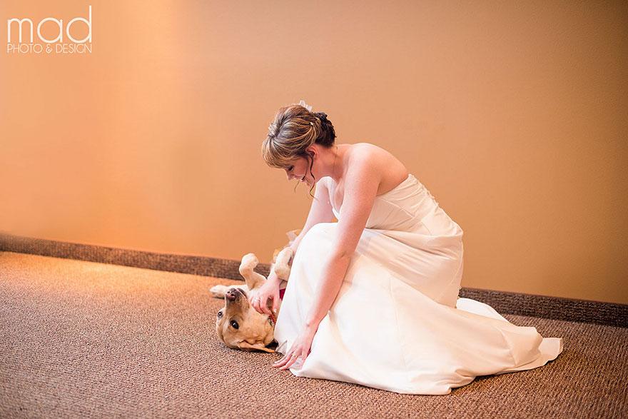 Cảm động chú chó an ủi cô dâu trước lễ cưới - 4