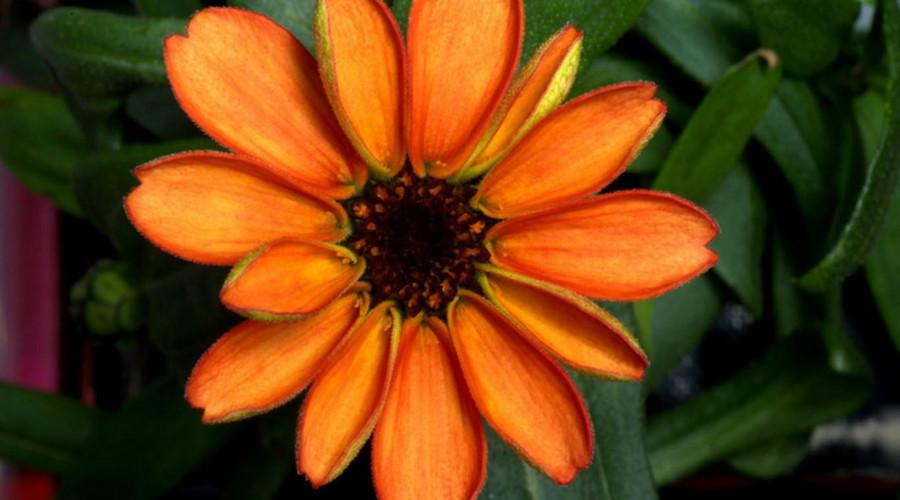 Bông hoa đầu tiên nở ngoài trái đất - 2