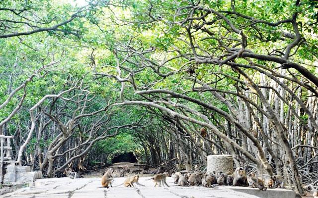 """Đặt chân đến """"vương quốc khỉ"""" trên ốc đảo xanh ở Sài Gòn - 1"""