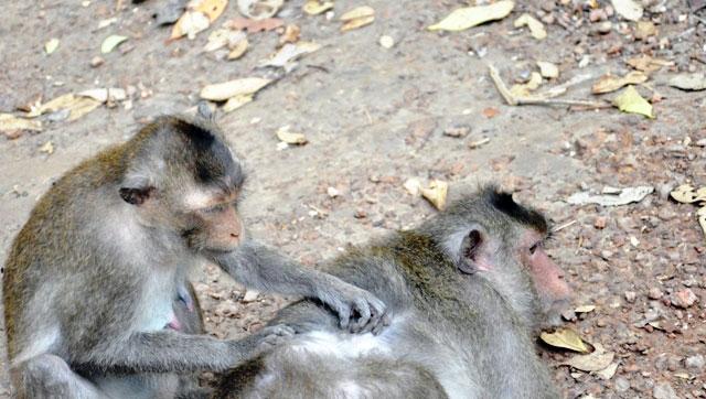 """Đặt chân đến """"vương quốc khỉ"""" trên ốc đảo xanh ở Sài Gòn - 10"""