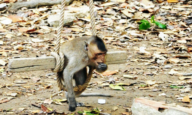 """Đặt chân đến """"vương quốc khỉ"""" trên ốc đảo xanh ở Sài Gòn - 11"""