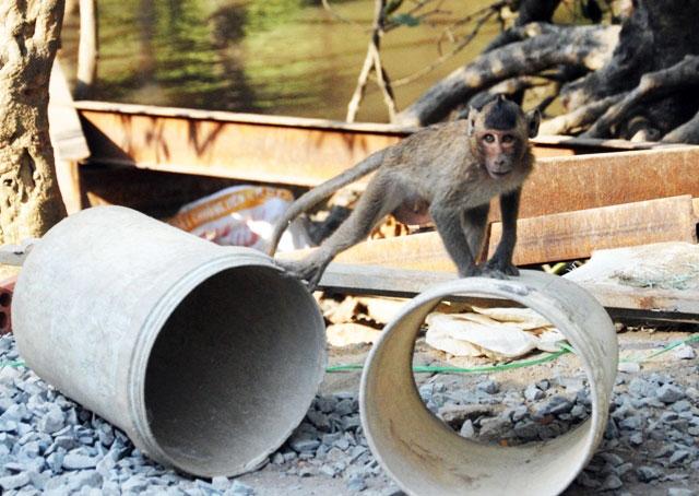 """Đặt chân đến """"vương quốc khỉ"""" trên ốc đảo xanh ở Sài Gòn - 12"""