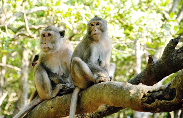 """Đặt chân đến """"vương quốc khỉ"""" trên ốc đảo xanh ở Sài Gòn - 13"""
