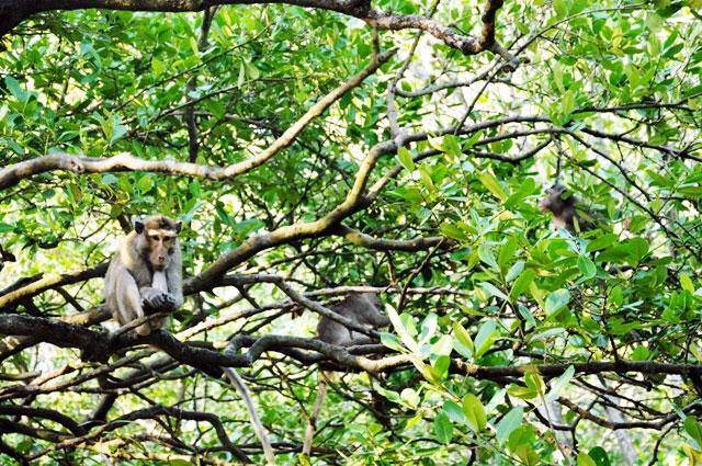 """Đặt chân đến """"vương quốc khỉ"""" trên ốc đảo xanh ở Sài Gòn - 14"""