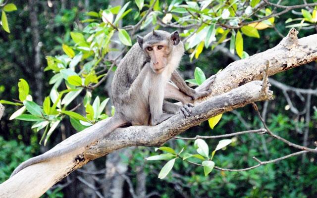 """Đặt chân đến """"vương quốc khỉ"""" trên ốc đảo xanh ở Sài Gòn - 15"""